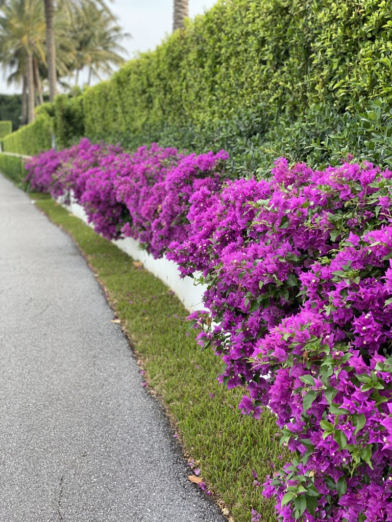 Guide to Palm Beach, Hallie Says: Guide to Palm Beach